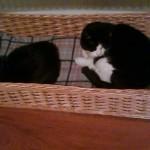 custom made cat basket