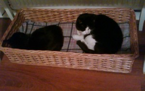 custom made cat basket