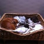 custom made dog basket