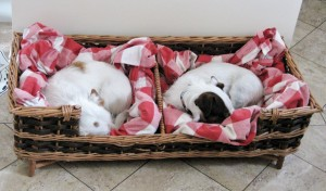 custom made dog basket