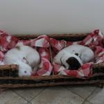 dog basket on legs made in uk